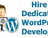 Hire WordPress Developers: Points To Consider While Taking The Services